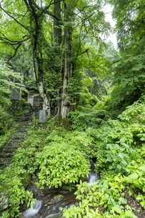 軍刀利神社の石段の写真素材 [FYI04680513]