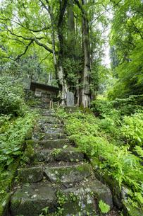 軍刀利神社の石段の写真素材 [FYI04680514]