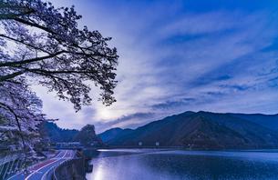 奥多摩湖の桜の写真素材 [FYI04680603]