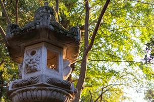 泉龍寺の石灯籠の写真素材 [FYI04680629]