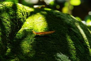 枯れ葉の写真素材 [FYI04680659]