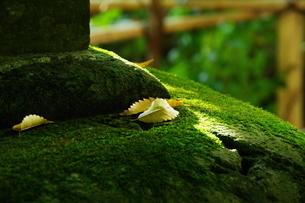 枯れ葉の写真素材 [FYI04680660]