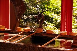 来宮神社の手水舎の写真素材 [FYI04680663]