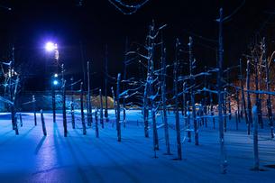 ライトアップされた冬の幻想的な青い池の写真素材 [FYI04680746]