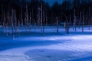 ライトアップされた冬の青い池の写真素材 [FYI04680755]