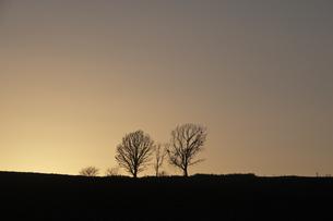 夕暮れの空と丘に立つ冬木立の写真素材 [FYI04680757]