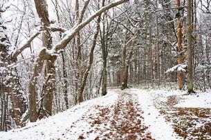 初冬の公園の枯れ葉に覆われた道の写真素材 [FYI04680759]