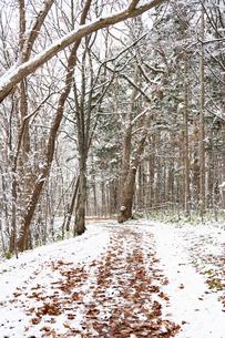 初冬の公園の枯れ葉に覆われた道の写真素材 [FYI04680760]