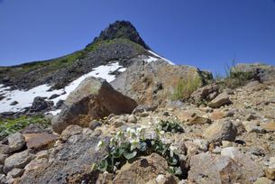 シレトコスミレと硫黄山(北海道・知床)の写真素材 [FYI04680873]