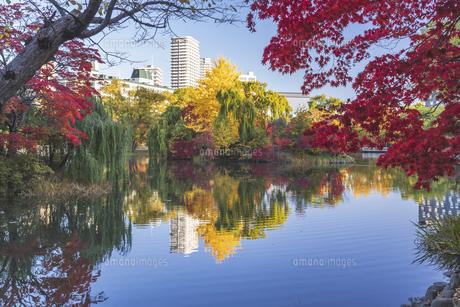 秋色の中島公園の写真素材 [FYI04680920]