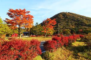 紅葉の榛名山 榛名富士 ロープウェイ乗り場付近の紅葉の写真素材 [FYI04680922]