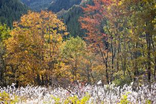 日本の秋の風景の写真素材 [FYI04681246]