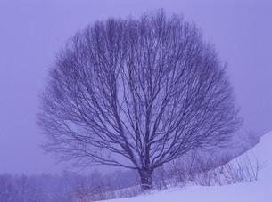 長野県池田町 大峰高原の写真素材 [FYI04681273]
