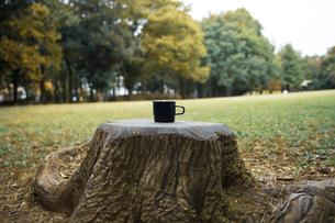 切り株に置かれたカップの写真素材 [FYI04681642]