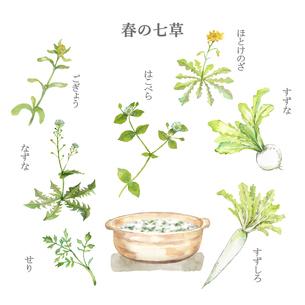 春の七草と七草粥 水彩画のイラスト素材 [FYI04681929]