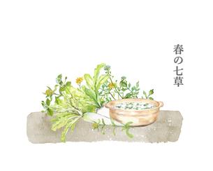 春の七草と七草粥 水彩画のイラスト素材 [FYI04681931]