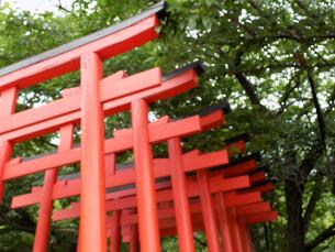 鳥居 Torii gate ボケ bokehの写真素材 [FYI04682030]