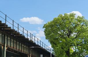ニューヨーク市 ロングアイランドシティーの地下鉄高架線横に育つ新緑の大木。の写真素材 [FYI04682112]