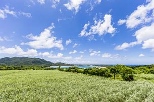美しい川平湾と眼前に広がる石垣の緑の写真素材 [FYI04682245]