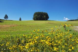もう一つのマイルドセブンの丘の写真素材 [FYI04682406]