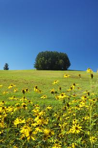 もう一つのマイルドセブンの丘の写真素材 [FYI04682408]