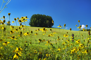 もう一つのマイルドセブンの丘と野の花の写真素材 [FYI04682435]