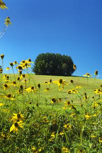 もう一つのマイルドセブンの丘と野の花の写真素材 [FYI04682436]