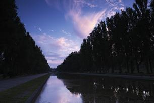 前田森林公園のポプラ並木の朝の写真素材 [FYI04682437]