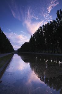 前田森林公園のポプラ並木の朝の写真素材 [FYI04682438]