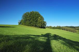 もう一つのマイルドセブンの丘の写真素材 [FYI04682447]