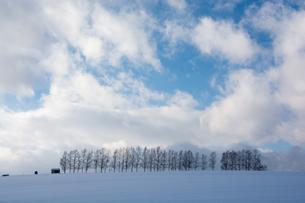 冬の丘の上のシラカバ並木の写真素材 [FYI04682457]