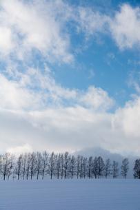 雪の丘の上のシラカバ並木の写真素材 [FYI04682458]