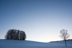 冬の美しい夕暮れの空と丘の上のカラマツ林の写真素材 [FYI04682463]