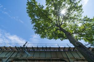 ニューヨーク市 ロングアイランドシティーの地下鉄高架線横に育つ新緑の大木。の写真素材 [FYI04682591]