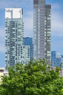 クイーンズ ボローブリッジ橋脚横の新緑越しにそびえ立つニューヨーク市 クイーンズ ロングアイランドシティー クイーンズボロープラザの新興高層ビル群。の写真素材 [FYI04682603]