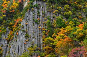 【 秋山郷 】 布岩 紅葉の季節 の写真素材 [FYI04682650]