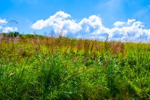 【自然風景】真夏の草原の様子 ローアングルの写真素材 [FYI04682659]