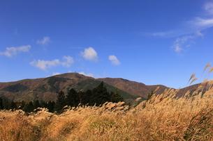 仙石原のすすき5の写真素材 [FYI04682827]