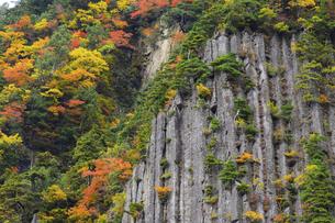 【 秋山郷 】 布岩 紅葉の季節 の写真素材 [FYI04682840]
