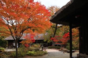 栃木県湯西川温泉の平家の里 紅葉の平家の里の写真素材 [FYI04683067]