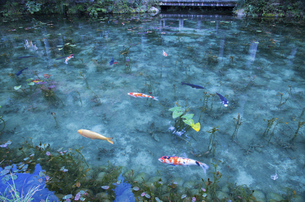 モネの池の写真素材 [FYI04683193]