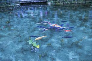 モネの池の写真素材 [FYI04683195]