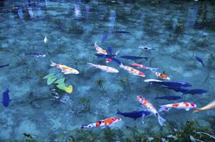 モネの池の写真素材 [FYI04683197]