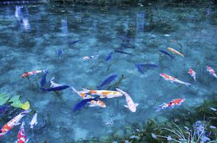 モネの池の写真素材 [FYI04683198]