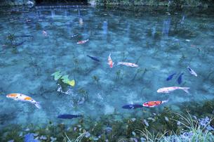 モネの池の写真素材 [FYI04683199]