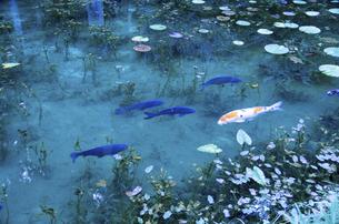 モネの池の写真素材 [FYI04683200]
