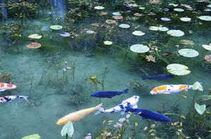 モネの池の写真素材 [FYI04683202]