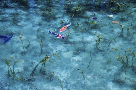モネの池の写真素材 [FYI04683203]