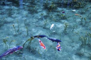 モネの池の写真素材 [FYI04683204]