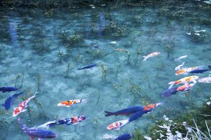 モネの池の写真素材 [FYI04683205]
